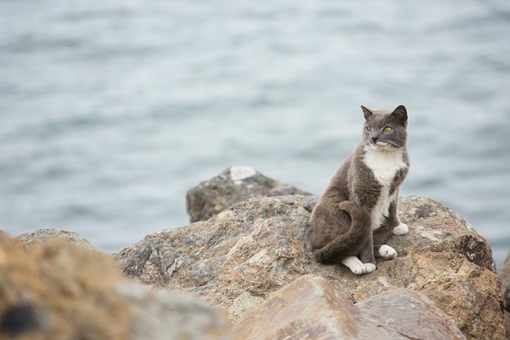 Cats Beach Blast