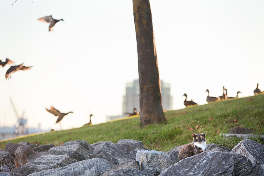 baltimore-animal-photography-11