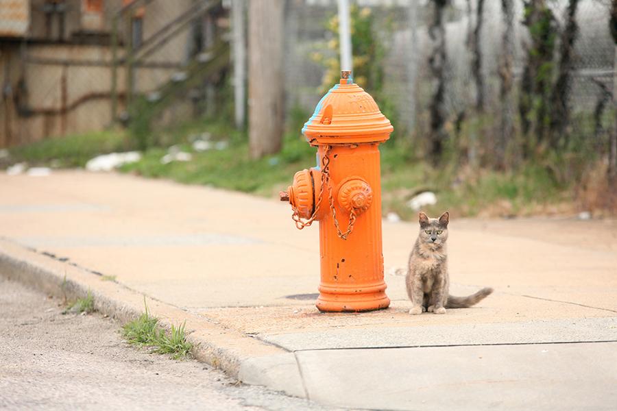 baltimore-animal-photography-23
