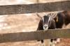 baltimore-animal-photography-12