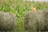 baltimore-animal-photography-15