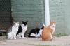 baltimore-animal-photography-18