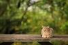 baltimore-animal-photography-19