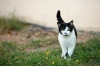 baltimore-animal-photography-21