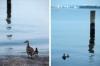baltimore-animal-photography-3