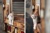 baltimore-animal-photography-5