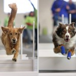Flyball Tournament – hosted by the Blue Ridge Blast